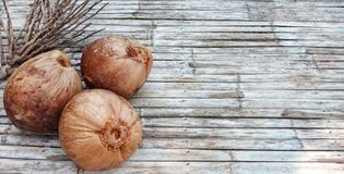 Brown old coconut fruit. stock photo