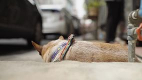 Brown old dog sleep on the concrete floor then look up toward camera stock video footage