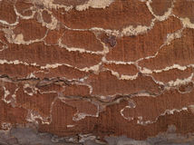 Brown old texture Stock Images