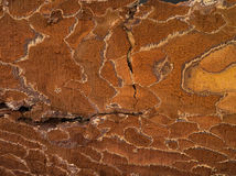 Brown old texture Royalty Free Stock Images