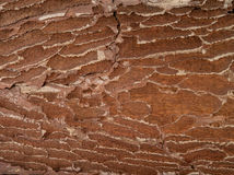 Brown old texture Royalty Free Stock Photos