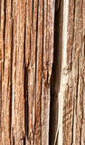 Brown old Wood background Royalty Free Stock Image