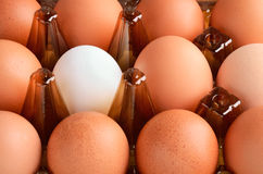 Brown and one white eggs in tray horizontal stock illustration