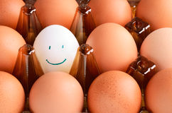 Brown  and one white smile eggs in tray horizontal. Brown and one white smile eggs in tray horizontal on the full backgrpound close-up Royalty Free Stock Photo