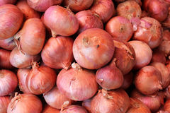 Brown onion. Allium cepa, bulbous plant with mature bulbs covered with brown paper sheaths, used as vegetable and salad and in spices royalty free stock photography