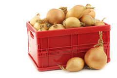 Brown onions in a red plastic box Stock Photography