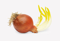 Brown onions with sprouts Royalty Free Stock Photo