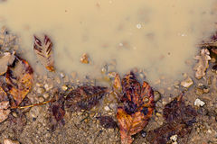 Brown Orange Autumn Leaves in Rain Puddle Fall Background Stock Image