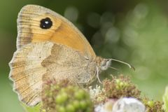 A brown and orange butterfly on Southampton Common royalty free stock image