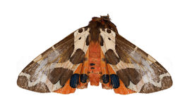 Brown and orange butterfly on white Stock Photo
