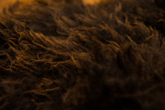 Brown and Orange Fur Texture Macro Royalty Free Stock Photo