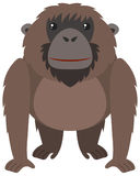 Brown orangutan with happy face. Illustration Royalty Free Stock Photo