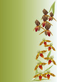 Brown orchid branches on green Royalty Free Stock Images
