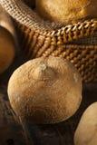 Brown orgánico crudo Jicama Imagen de archivo
