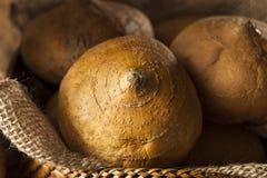 Brown orgánico crudo Jicama Imágenes de archivo libres de regalías