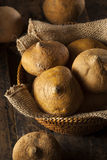 Brown organique cru Jicama Images stock