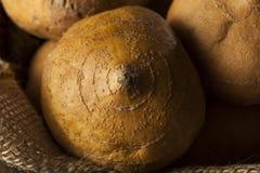 Brown organique cru Jicama Image libre de droits