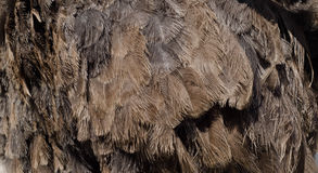 Brown ostrich feather background royalty free stock images