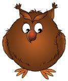 Brown owl Stock Photos