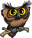 Brown owl isolated Royalty Free Stock Photo
