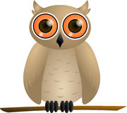Brown owl with orange eyes. Sitting on a branch Royalty Free Stock Images