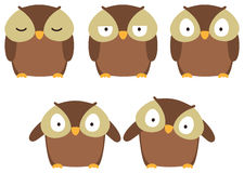 Brown owl Stock Photos