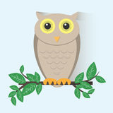 Brown Owl Sitting on a Branch Stock Image