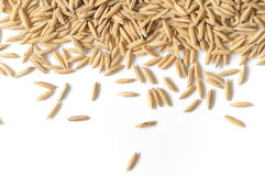 Brown paddy rice. Stock Photo