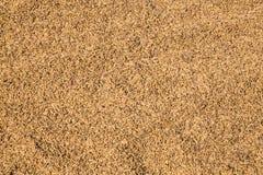 Brown paddy rice Stock Image