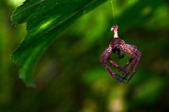 Brown pająk jest na pajęczynie Zdjęcia Stock
