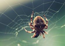 Brown pająk na sieci przy selekcyjnej ostrości zakończeniem up Fotografia Royalty Free