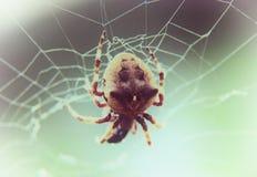 Brown pająk na sieci przy selekcyjnej ostrości zakończeniem up Obraz Stock