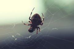 Brown pająk na sieci przy selekcyjnej ostrości zakończeniem up Fotografia Stock