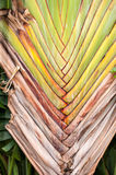 Brown palm leaf Royalty Free Stock Images