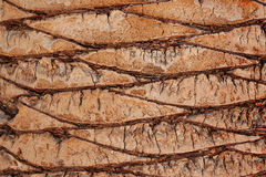Brown palm tree bark Royalty Free Stock Photography