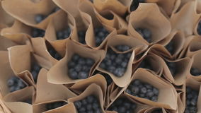 A brown paper bag full of picked blueberries stock footage