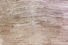 Brown-Papier-Abteilung Lizenzfreie Stockbilder