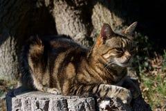 Brown paskował kota obsiadanie na drzewnym bagażniku w słońcu obraz stock