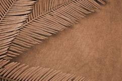 Brown patterns of cycad leaves and towel. Details of brown patterns of cycad leaves and towel top view Royalty Free Stock Image