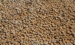 Brown pebble Royalty Free Stock Photos