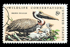 Brown Pelican Bird Postage Stamp Stock Photo