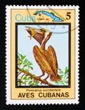 Brown Pelican Pelecanus occidentalis, Endemic birds, circa 1983. MOSCOW, RUSSIA - AUGUST 29, 2017: A stamp printed in Cuba shows Brown Pelican Pelecanus stock images