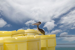 Brown Pelican on a ship royalty free stock image