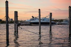 Brown Pelicans in a Place for Fishing at Sunset. Beautiful Boats on a Background. Park in Miami, FL stock photography