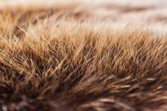 Brown-Pelz des Tieres stockbild