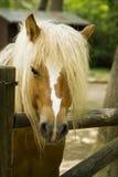 Brown-Pferd Stockfotos