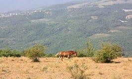 Brown-Pferd auf einem Hintergrund von Bergen und von offenen Räumen Stockfotos