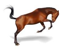 Brown-Pferd auf weißem Hintergrund Stockfotografie