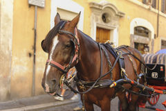 Brown-Pferd befestigte zum romantischen Wagen in Rom, Italien Lizenzfreie Stockfotos