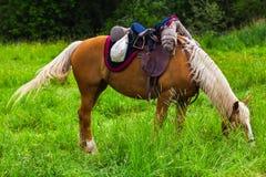 Brown-Pferd, das in der Wiese weiden lässt Stockfotografie